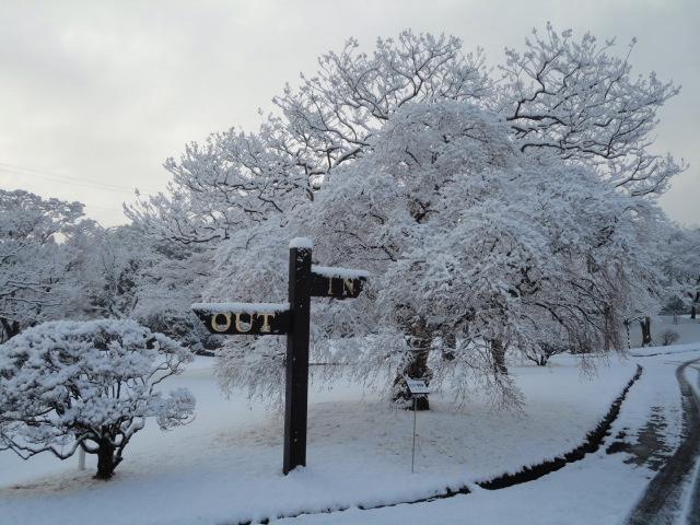GC成田ハイツリー|雪景色