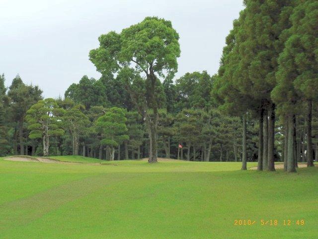 グリーン前のスタイミーな樹木